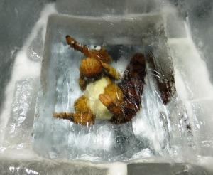dscf4690-ice-age